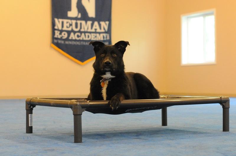 Emily - Boot Camp Level II. Dog Training