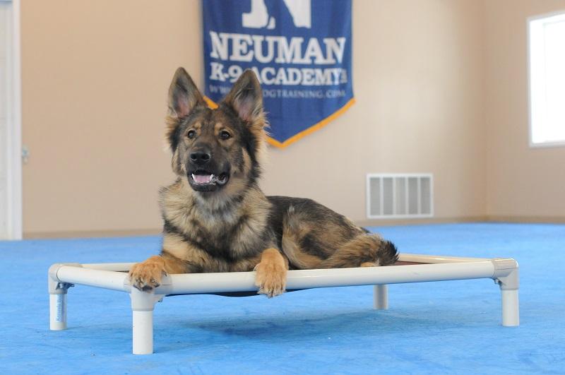 Emma (German Shepherd Dog) - Boot Camp Level II. Dog Training