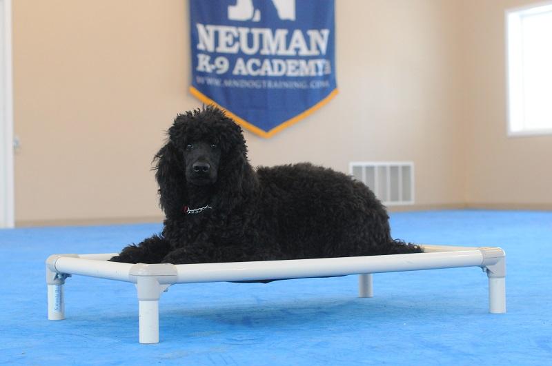 Ena - Boot Camp Level I. Dog Training