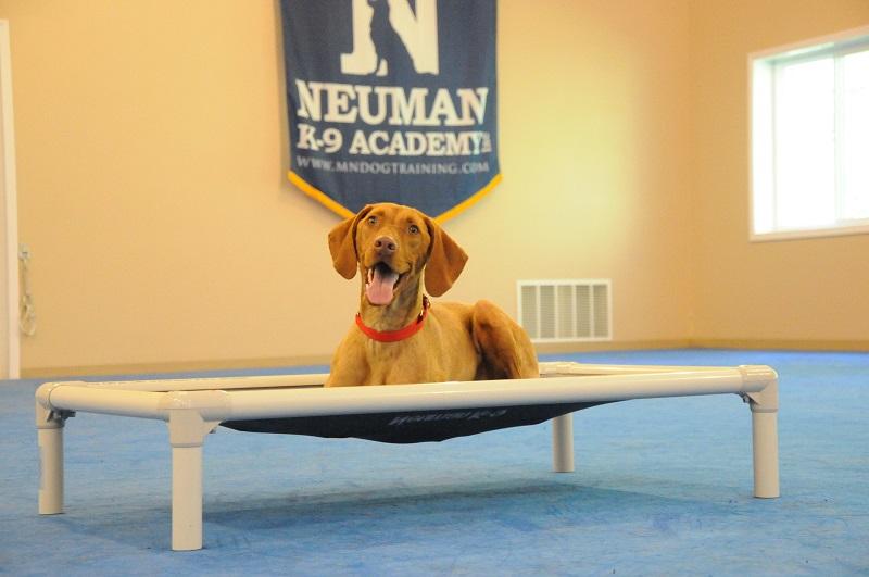Franklin (Vizsla) - Boot Camp Dog Training