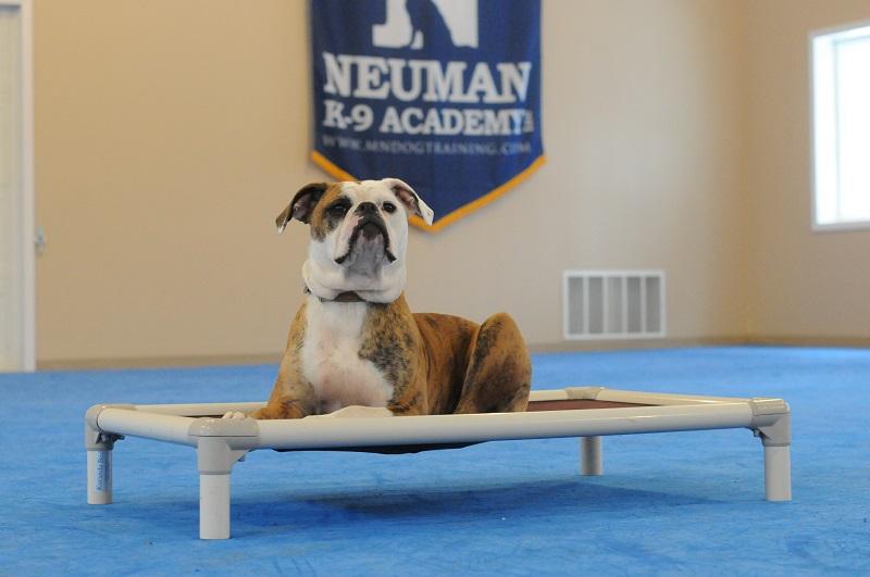 Gemma - Boot Camp Level II. Dog Training