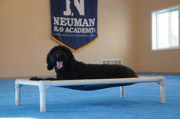 Gracie (Standard Poodle) - Boot Camp Level II. Dog Training