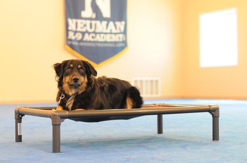 Harley (Australian Shepherd) - Boot Camp Dog Training