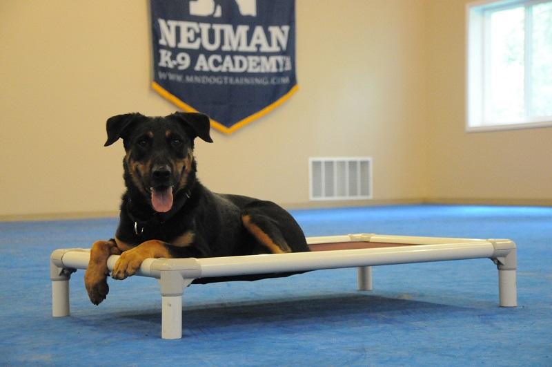 Ike - Boot Camp Dog Training