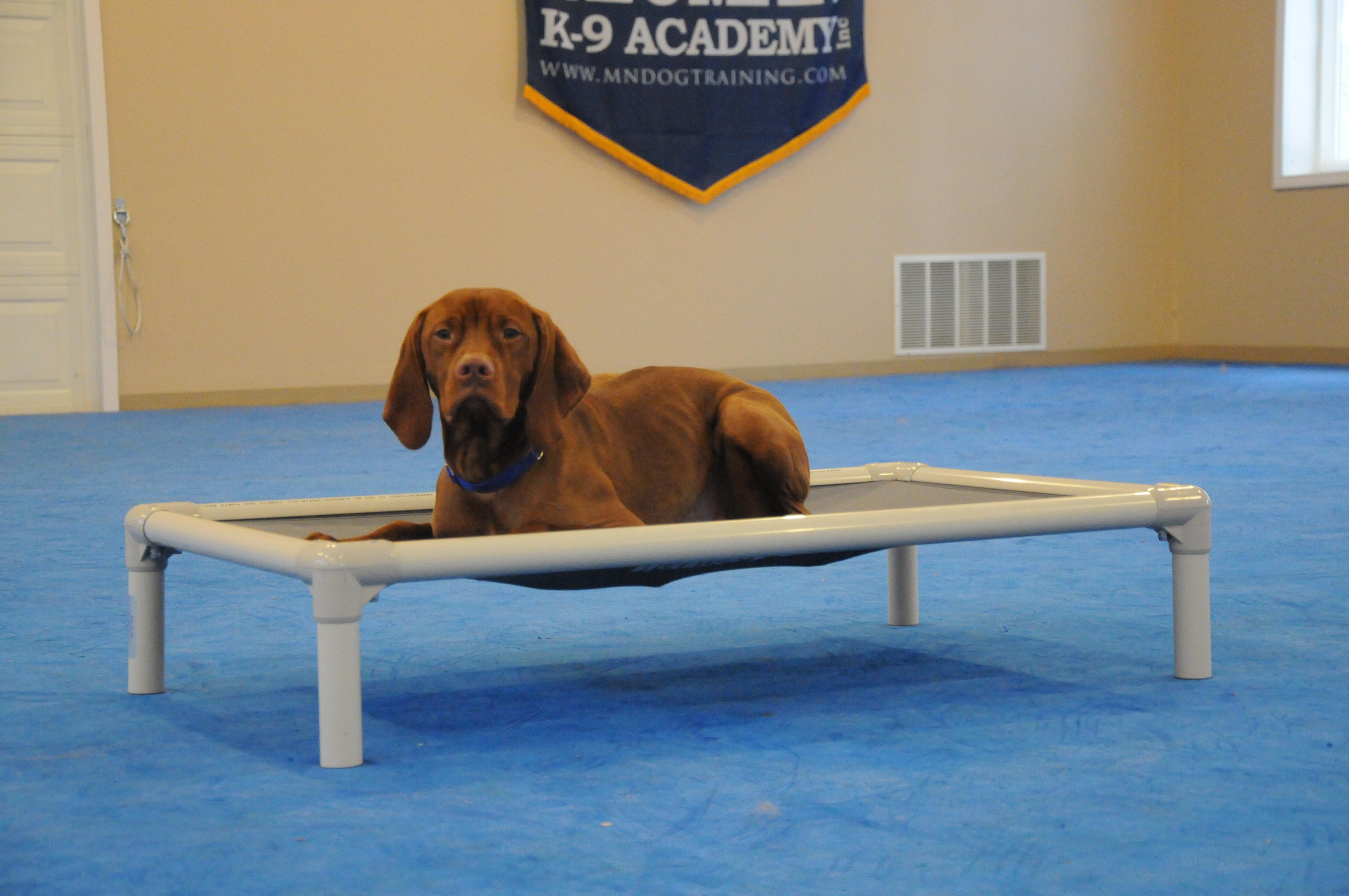 Jack (Vizsla) - Boot Camp Level I. Dog Training