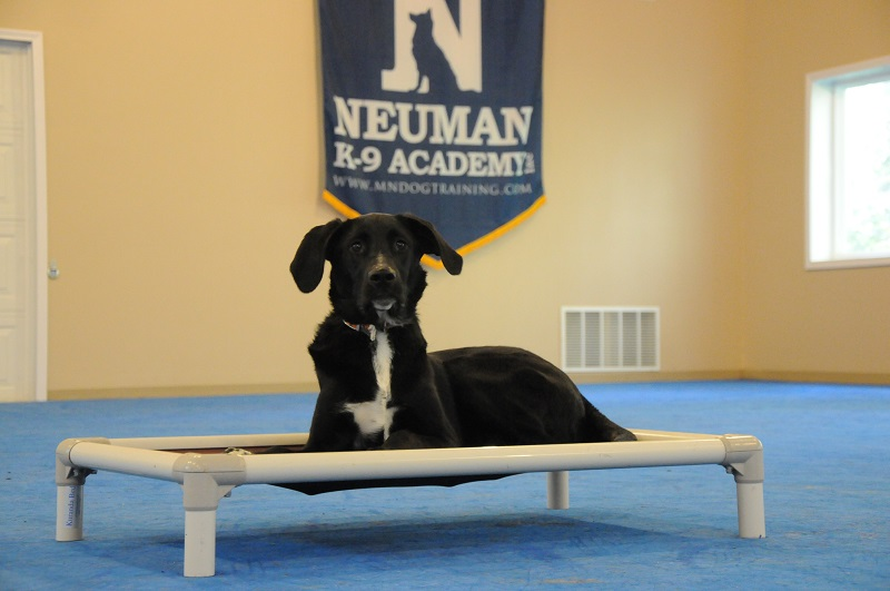 Jordan - Boot Camp Dog Training