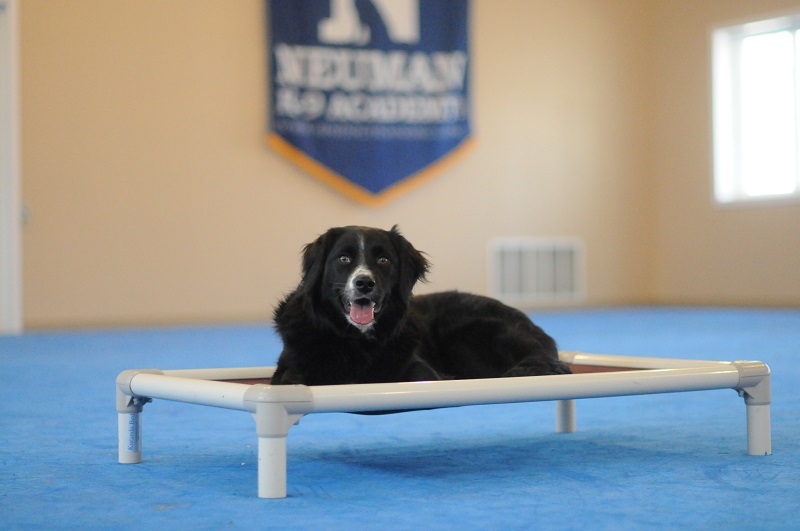 Kodi (Border Collie) - Boot Camp Level II. Dog Training