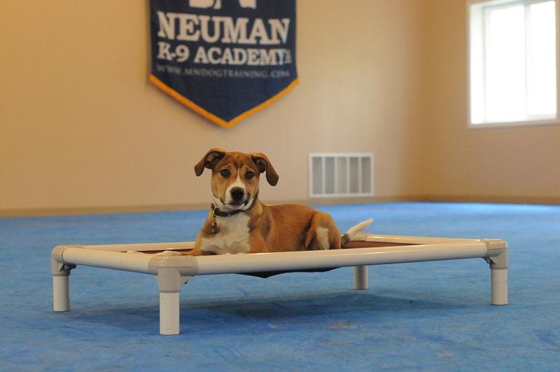 Lexi - Puppy Camp Level I. Dog Training