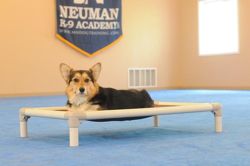 Lila (Welsh Corgi) - Puppy Camp Level I. Dog Training