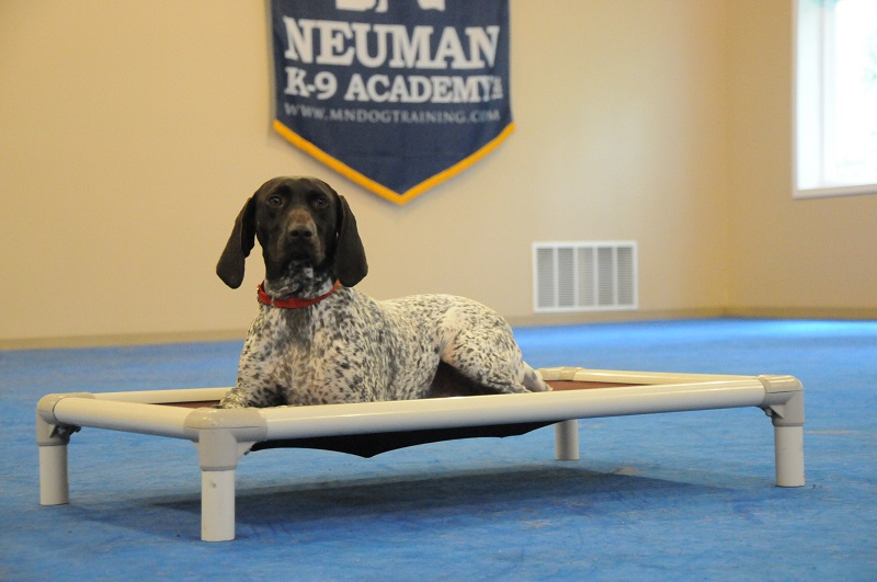 Lilo (German Shorthair Pointer) - Boot Camp Dog Training