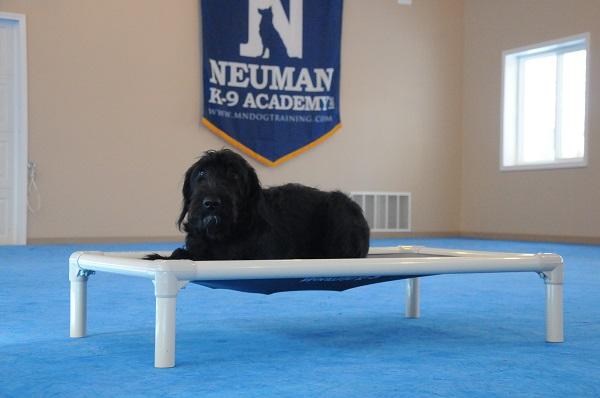 Lily (Labradoodle) - Boot Camp Level I. Dog Training