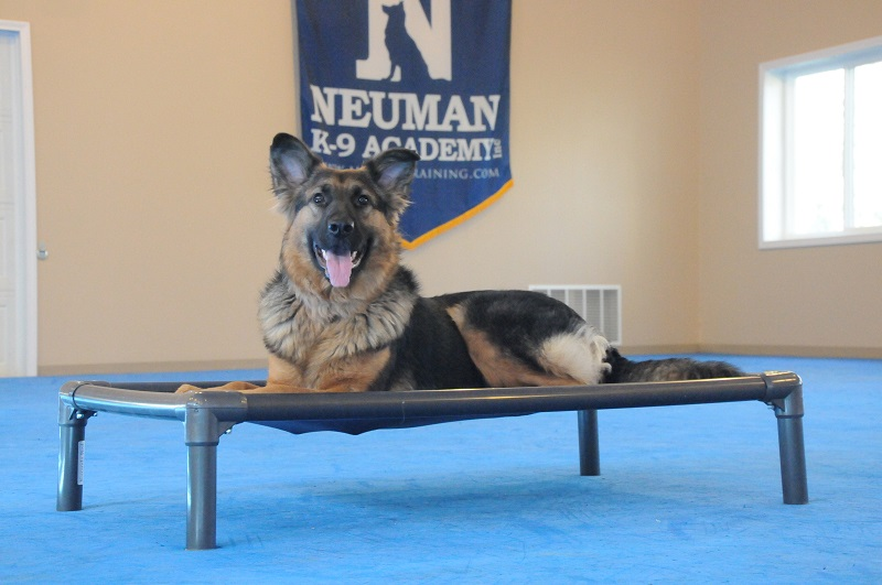 Lolli (German Shepherd) - Boot Camp Dog Training