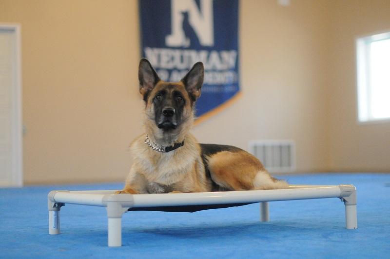 Lucy (German Shepherd) - Boot Camp Level III. Dog Training