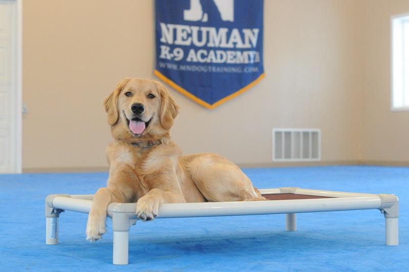 Lulu - Boot Camp Level I. Dog Training