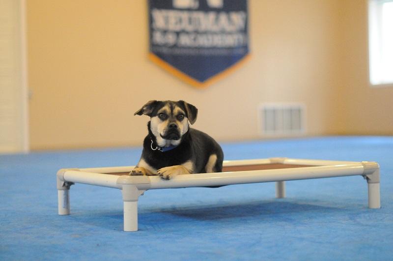 Luna - Boot Camp Level II. Dog Training