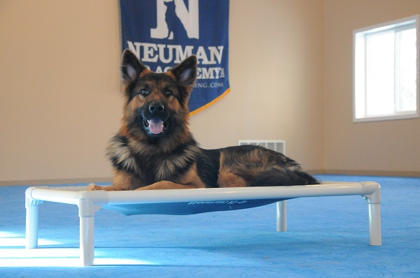 Luther (GSD) - Boot Camp Level II. Dog Training