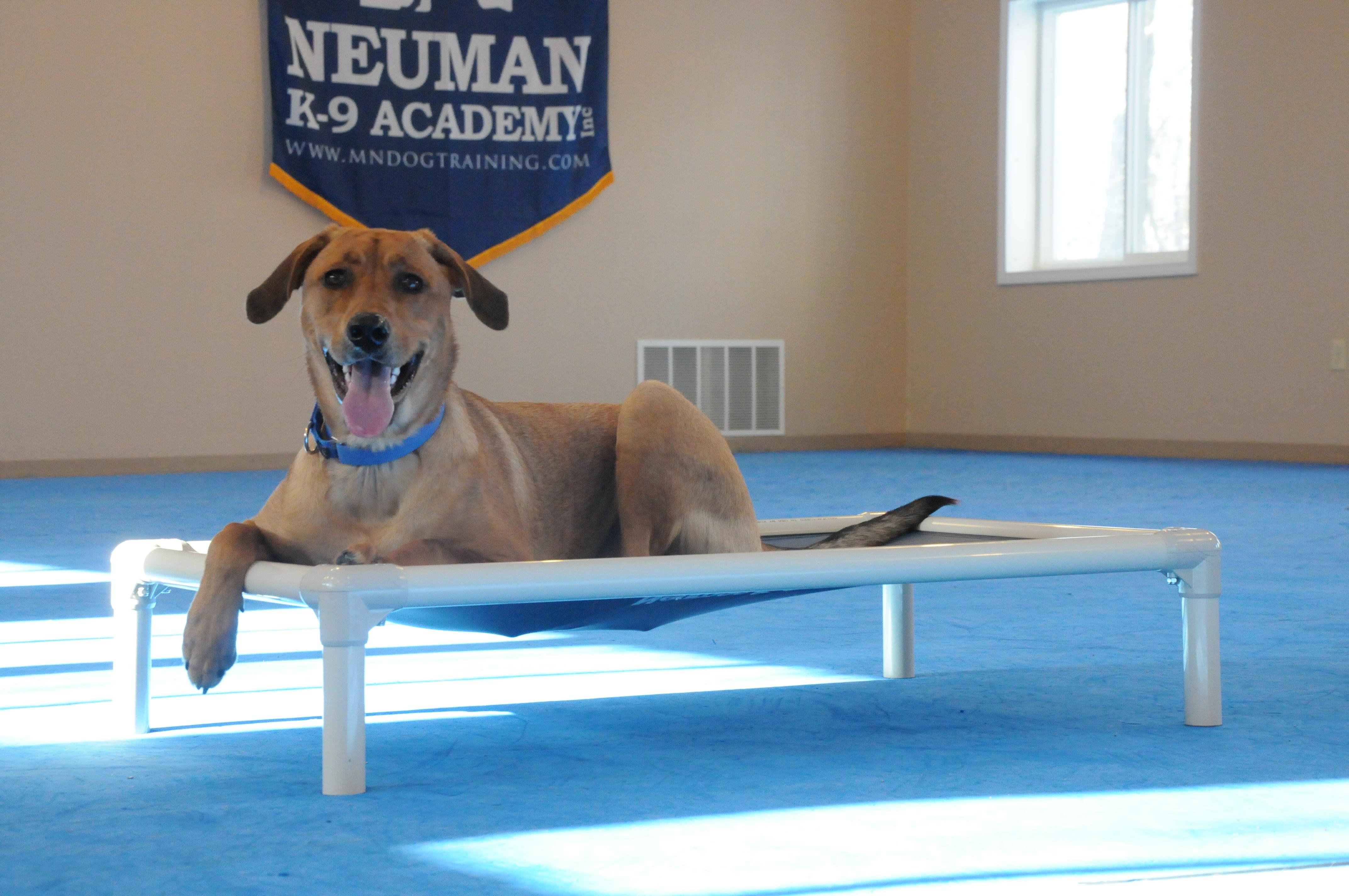 Macy - Boot Camp Level I. Dog Training