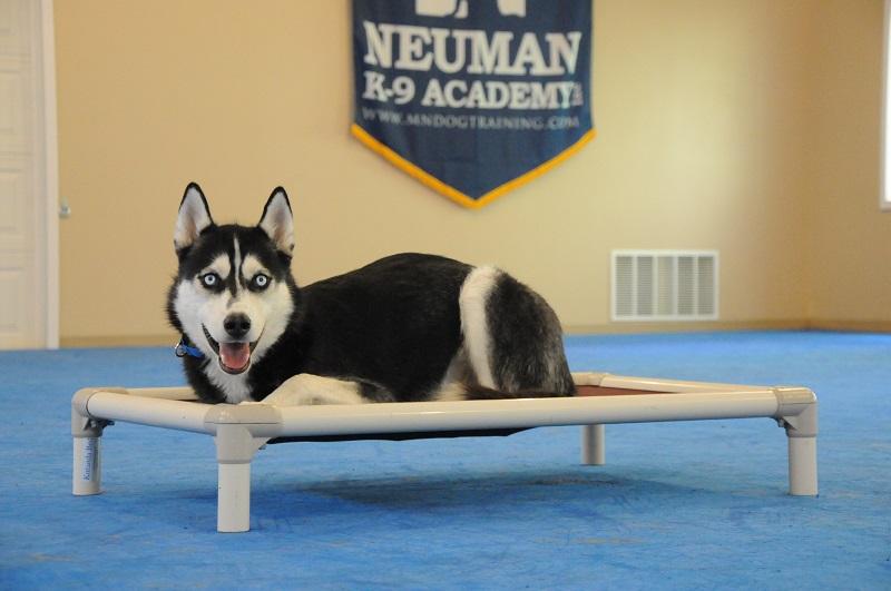 Malto (Siberian Husky) - Boot Camp Dog Training