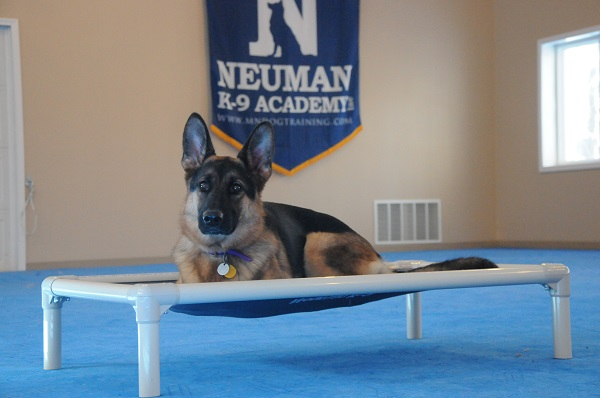 Myah (GSD) - Boot Camp Level II. Dog Training