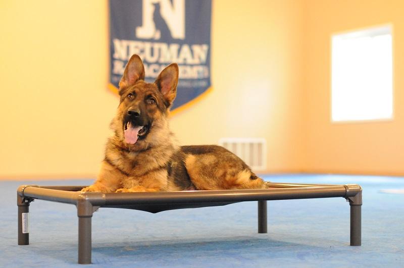 Monty (German Shepherd Dog) - Boot Camp Dog Training