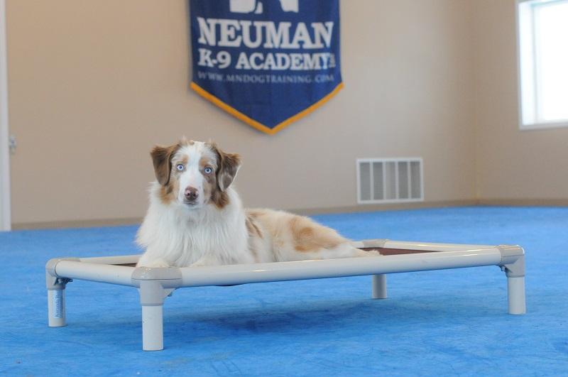 Murphy - Boot Camp Level I. Dog Training