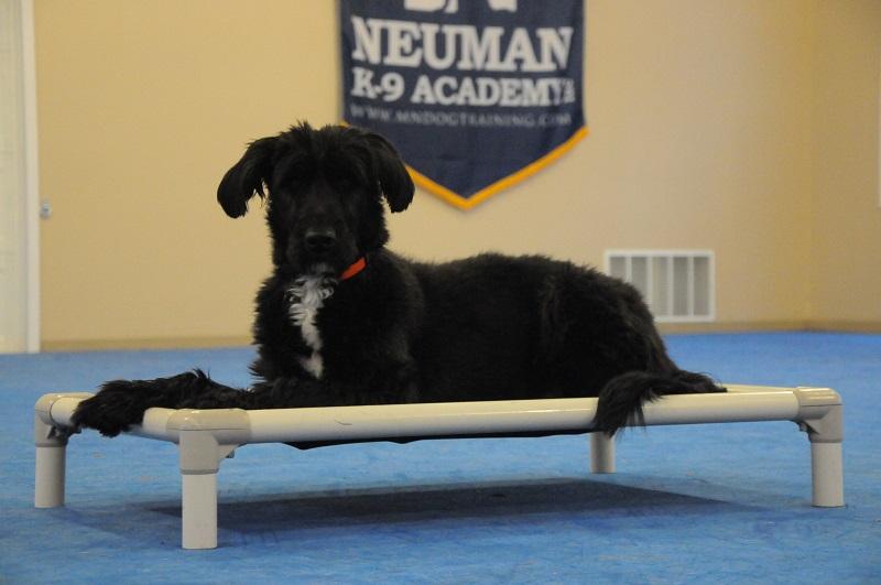 Nala - Boot Camp Dog Training