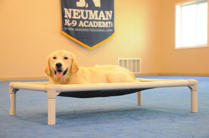 Nina (Golden Retriever) - Boot Camp Dog Training