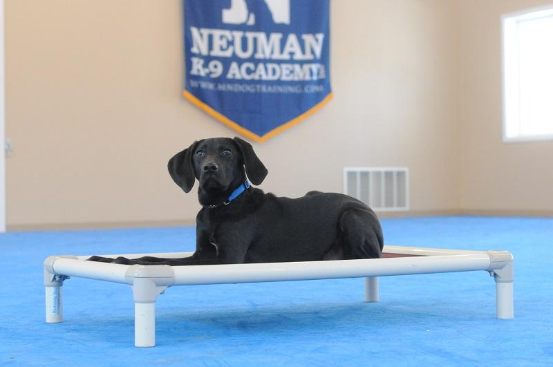 Oreo - Boot Camp Level I. Dog Training