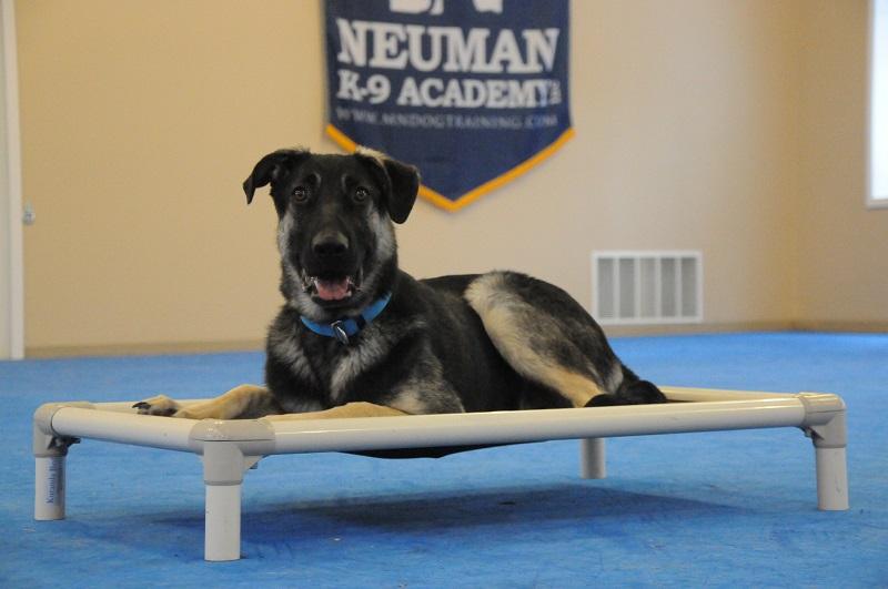Rafiki - Boot Camp Dog Training