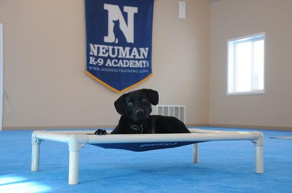 Rascal - Boot Camp Level I. Dog Training