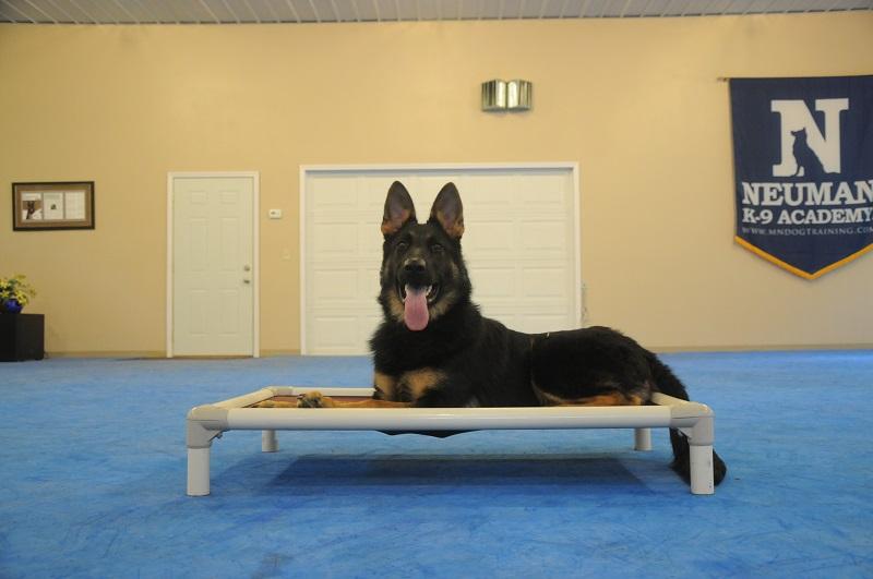 Rocco (German Shepherd) - Puppy Camp Level I. Dog Training