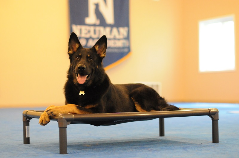 Rocky (German Shepherd Dog) - Boot Camp Dog Training
