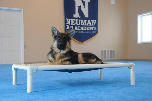 Rommel (German Shepherd Dog) - Puppy Camp Level I. Dog Training