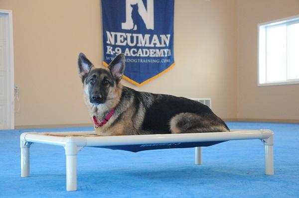 Schatzi (German Shepherd Dog) - Boot Camp Level II. Dog Training