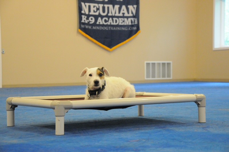 Silver (Jack Russell Terrier) - Boot Camp Dog Training