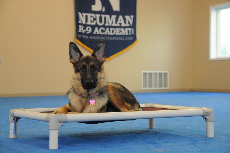 Skylar (German Shepherd) - Boot Camp Dog Training