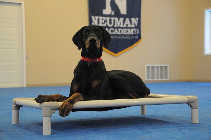 Stan (Doberman) - Boot Camp Dog Training