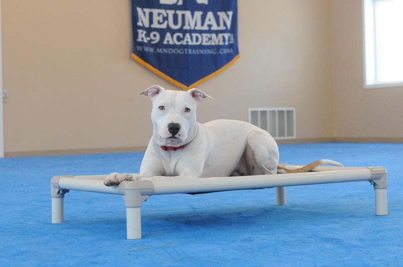 Stella - Boot Camp Level I. Dog Training