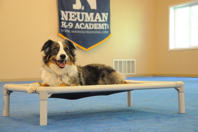 Stella (Australian Shepherd) - Boot Camp Dog Training
