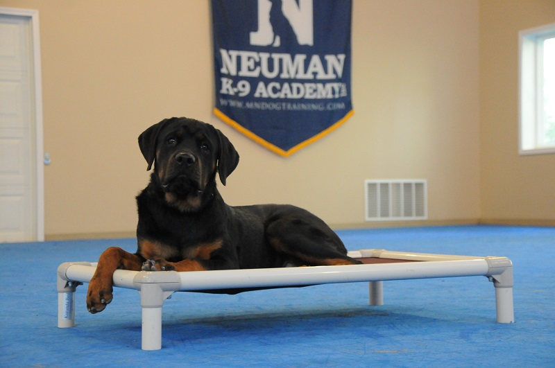 Thor (Rottweiler) - Boot Camp Dog Training