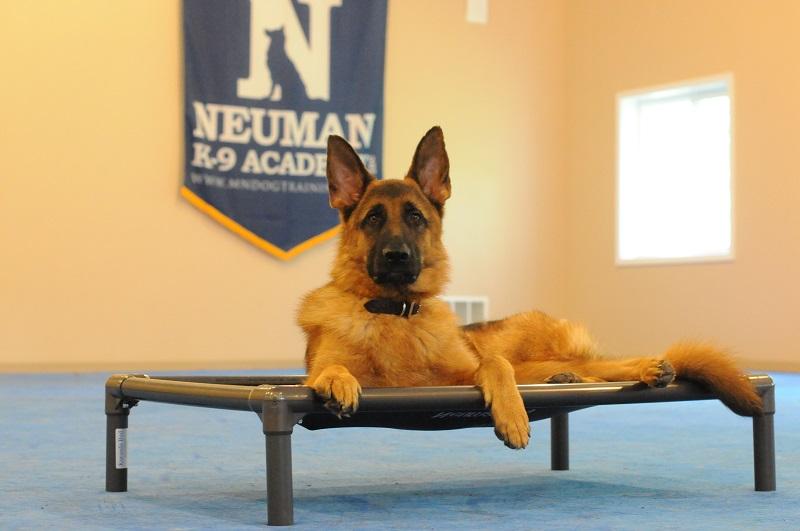 Trigger (German Shepherd) - Boot Camp Level II. Dog Training