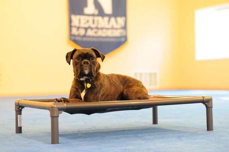 Tyson (Boxer) - Boot Camp Dog Training