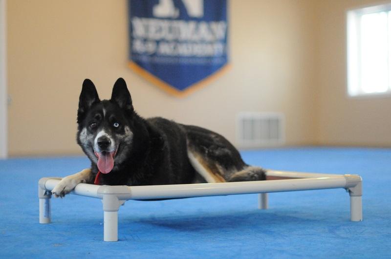 Vince - Boot Camp Level II. Dog Training