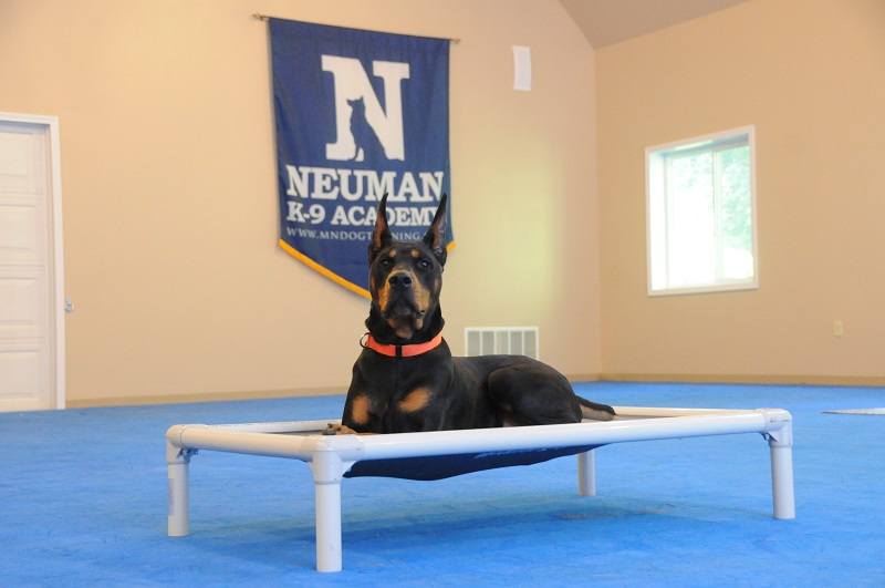 Atlas (Doberman Pinscher) - Boot Camp Dog Training
