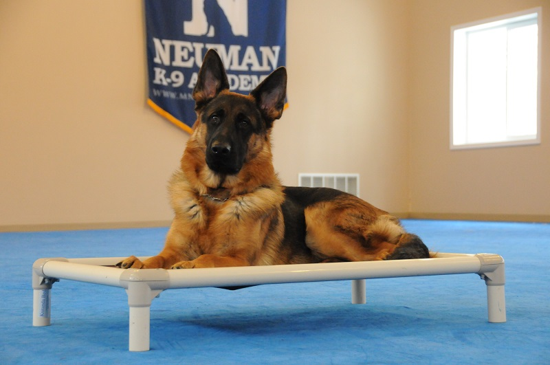 Casey (German Shepherd) - Boot Camp Dog Training