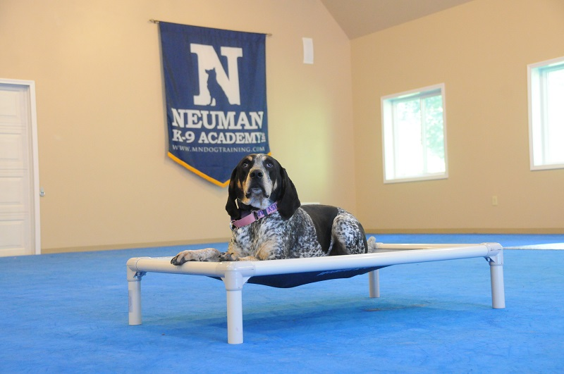 Daisy (Bluetick Coon Hound) - Boot Camp Dog Training