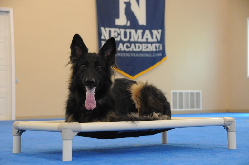 Gerda (German Shepherd Dog) - Boot Camp Dog Training