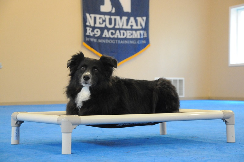 Grizzly (Border Collie) - Boot Camp Dog Training