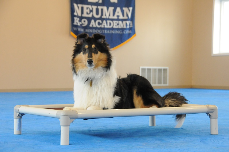 Hannah (Collie) - Boot Camp Dog Training