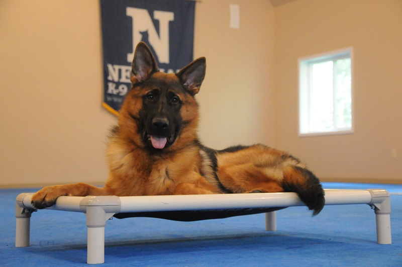 Jasper (German Shepherd Dog) - Boot Camp Dog Training
